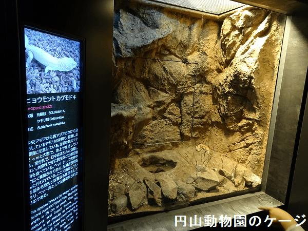 円山動物園のレオパ飼育ケージ