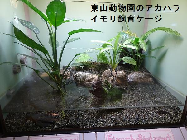 東山動物園のアカハライモリ飼育ケージ