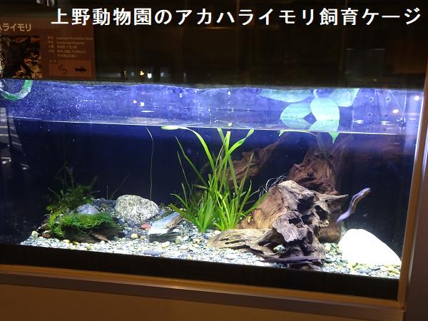 上野動物園のアカハライモリ飼育ケージ