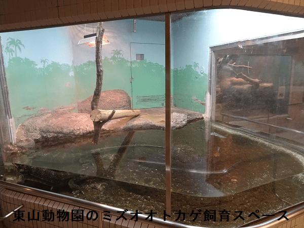 東山動物園のミズオオトカゲ飼育スペース