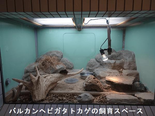 バルカンヘビガタトカゲの飼育スペース