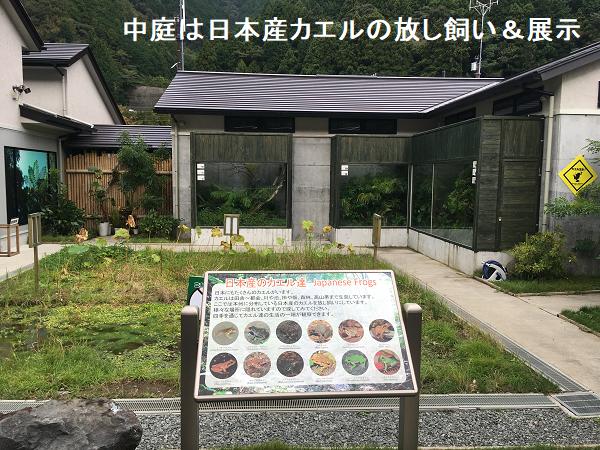 中庭は日本産カエルの放し飼い&展示