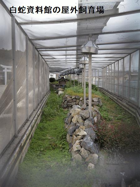 白蛇資料館の屋外飼育場