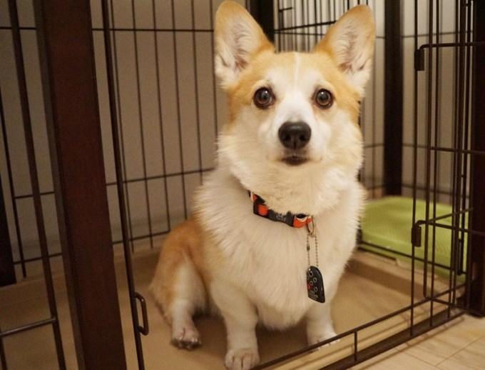 dog_kyoukenbyou-tyusya_4