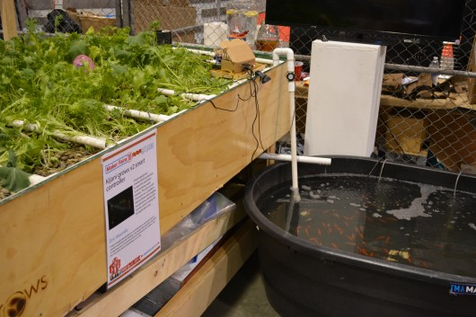 Aquaponics grows food, filters water, and reuses fish waste as fertalizer