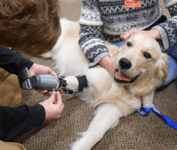 A good boy deserves a great prosthetic.
