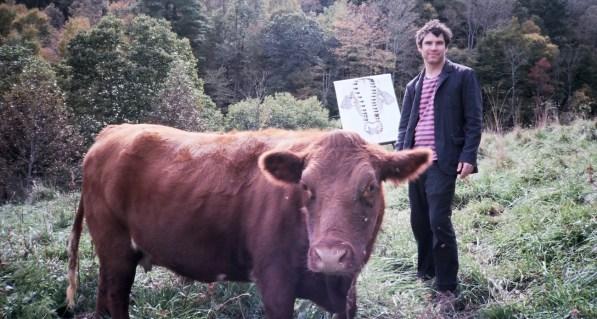 Cows 005 1