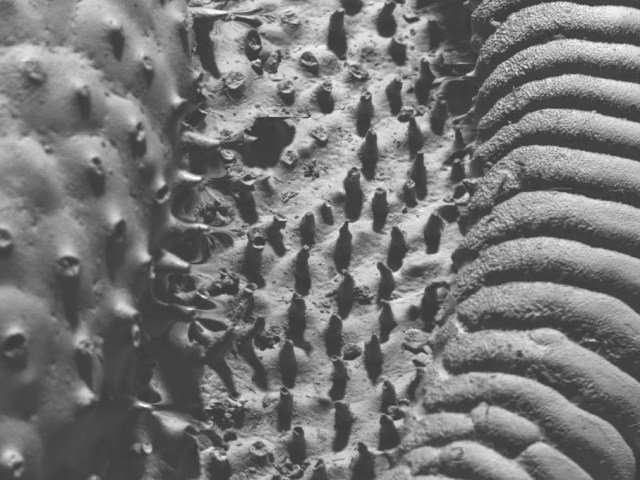 At low magnification, the shell resembles a diabolical, Giger-esque landscape.