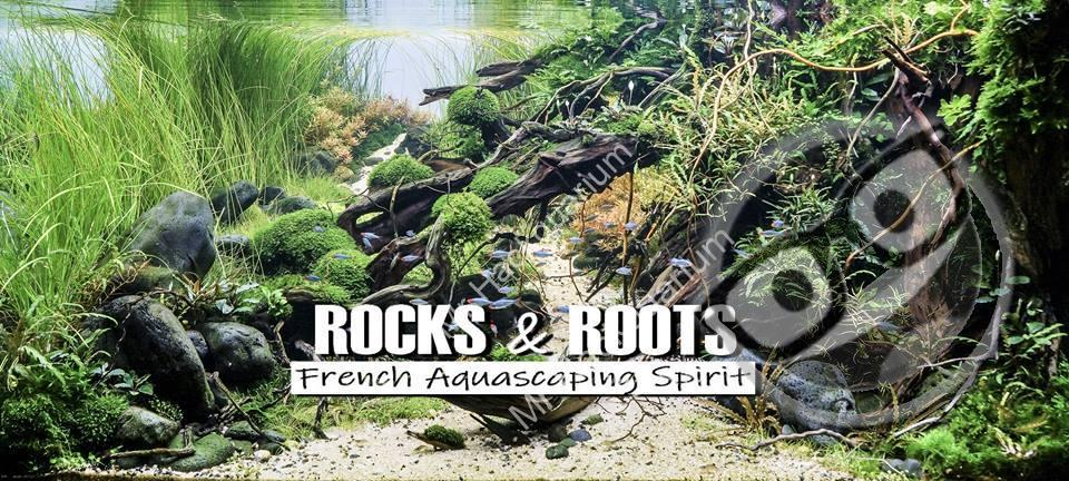 Rocks & Roots French Aquascaping Spirit