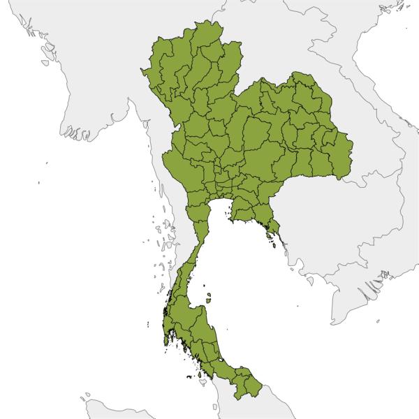 Thailande-Liste-Entreprises-V.I.E