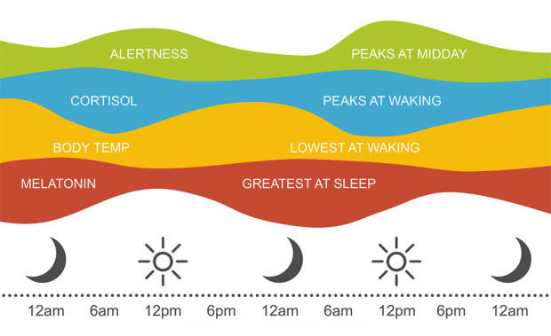 Image result for circadian zeitgebers