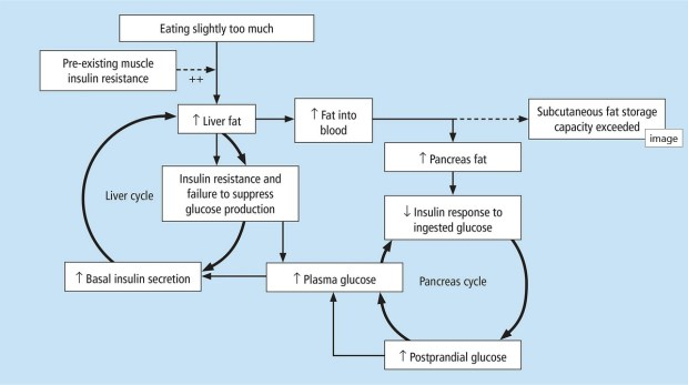 type 2 diabetes remission twin cycle