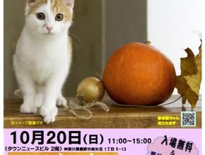10月20日(日)猫の譲渡会開催!