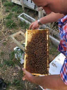 自家用ミツバチ