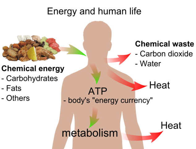 634px-Energy_and_life