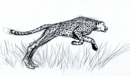 cheetah_web_small