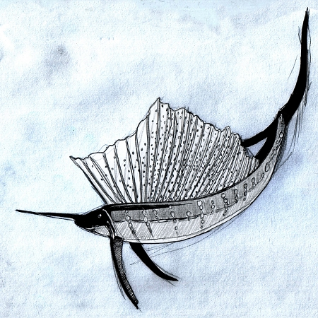 sailfish_web_small