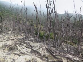 Hutan Mati