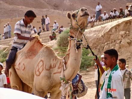 Tradisi Ziarah Nabi Hud As.