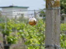 Wohl von Weihnachten übrig geblieben im Weingarten