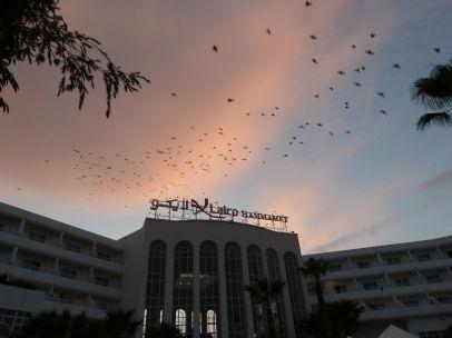 Abendflug der Vögel über unserem Hotel