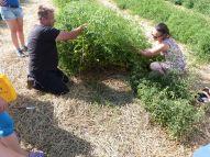 Erich Stekovics und seine Frau lüften das Geheimnis der Tomatenpflanzen....