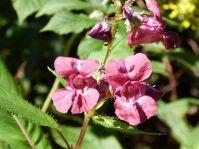 Schöne Blumen auf dem Weg