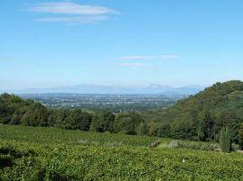 Blick vom Pool über die Weinberge bis in die Ebene, im Hintergrund ausnahmsweise mal die Berge