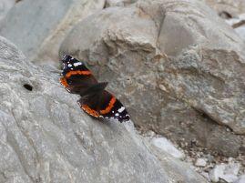 Schmetterling an unserer liebsten Badestelle