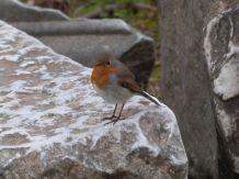 Ich war so früh auf dem Forum, daß noch alle Vögel unterwegs waren