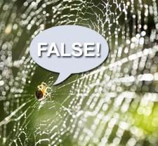 mini-quiz-spider-b-462x428