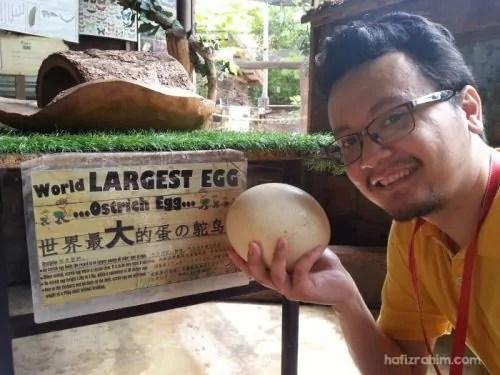 World largest egg