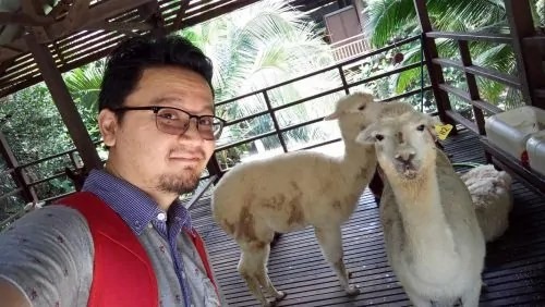 farm-in-the-city_alpaca-selfie