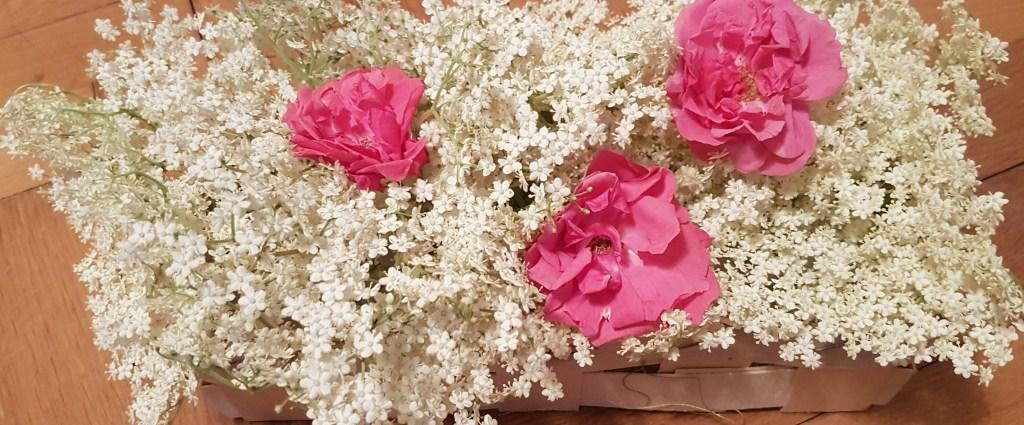 Holunder- und Rosenblüten