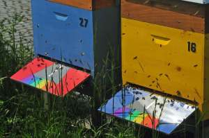 Unsere Bundesbienen auf der Bundeskunsthalle flogen jahrelang über Start- und Landebahn mit dem Regenbogen.