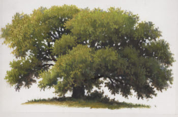 how to paint a tree illustration 2 by William Hagerman copyright 2013