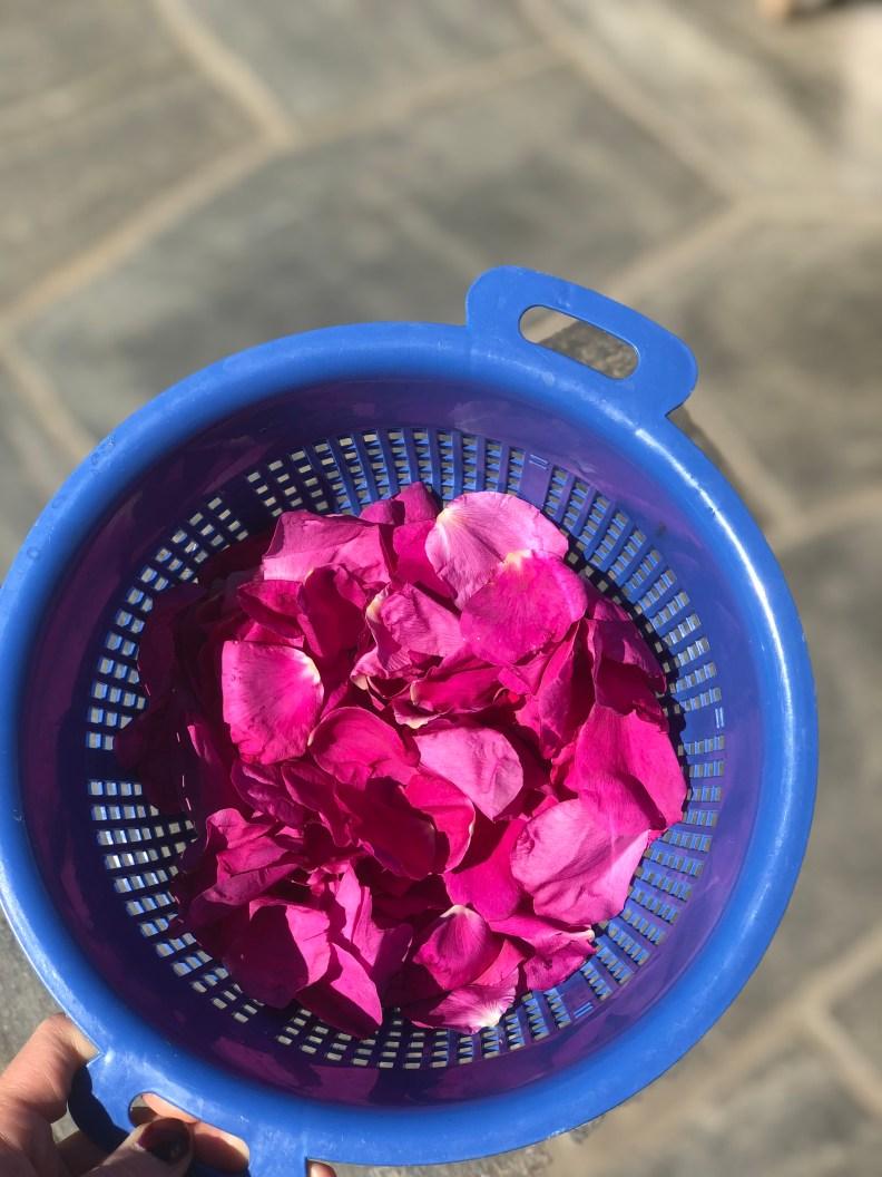 Roseblader til rosevann i en sil