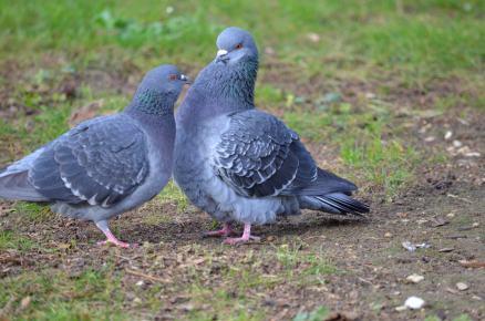 jardinbirds