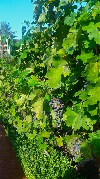 Green Valley Vineyard