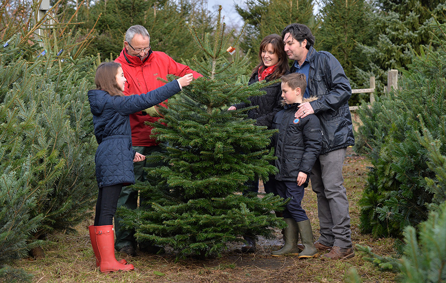 Hagley Christmas Trees. 3rd December 2016. Picture by Simon Hadley. 07774 193699 mail@simonhadley.co.uk www.simonhadley.co.uk