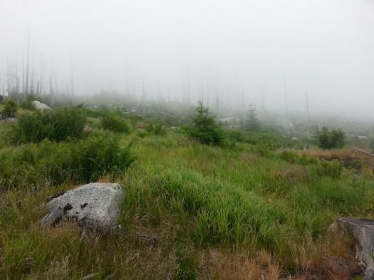 Dies ist saubere Luft (mit Nebel) auf dem Dreisessel!