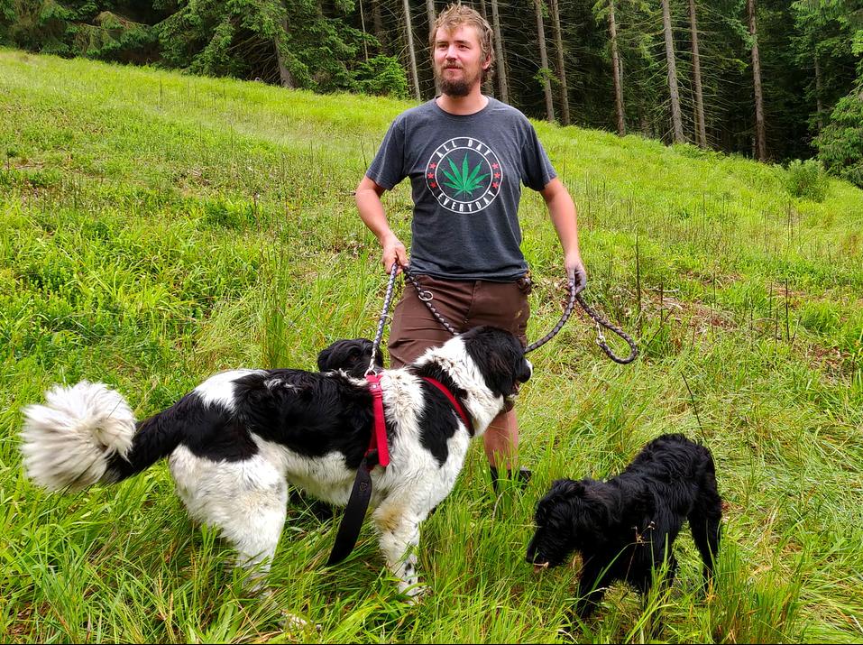 Schäfer mit Hunden