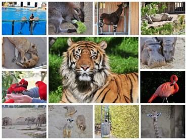 Gradina Zoologica