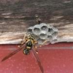 害虫駆除 蜂の巣 はち