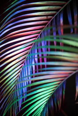 acid palm.jpg
