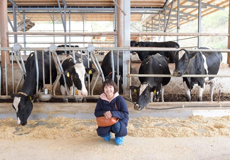 風の牧場 牛が覗き込む