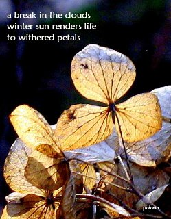 withered-petals-by-polona-oblak.jpg
