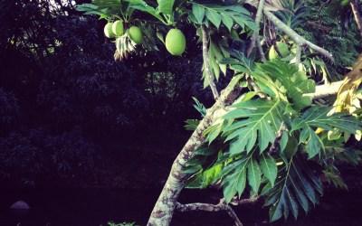 Tropiques (5)