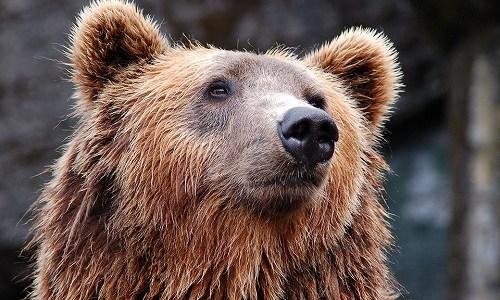 冬の季語『熊』