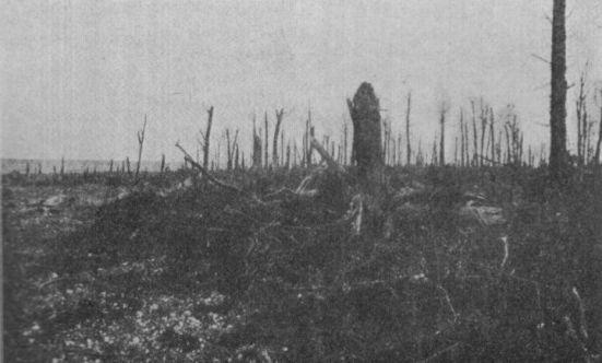 Le Bois Sénécat en 1918
